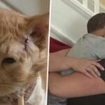 Gato salva la vida a un niño