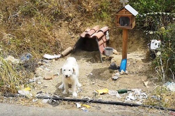 Un perro fiel ha esperado año y medio a su dueño
