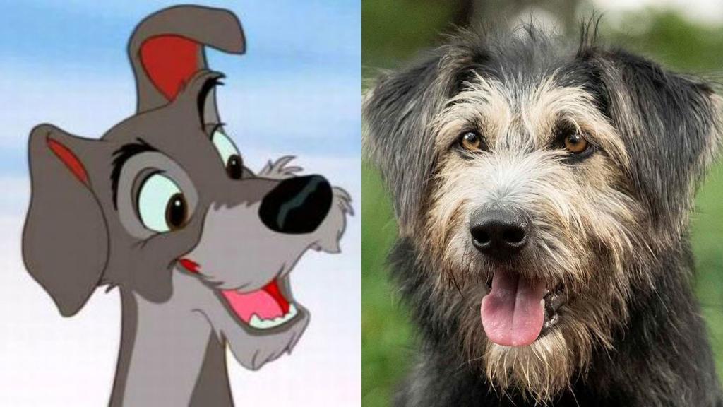 Disney adopta en una perrera a Monte, su nuevo Golfo para 'La dama y el vagabundo'