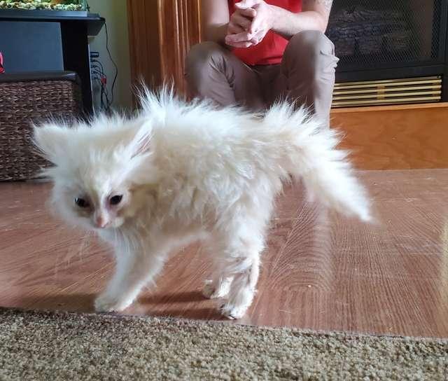 En un enternecedor acto de bondad clínica salva y cuida a pequeño gatito huérfano