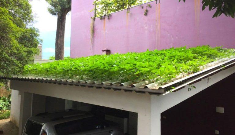 Teja hidropónica la primera en el mundo es realizada por un ingeniero brasileño