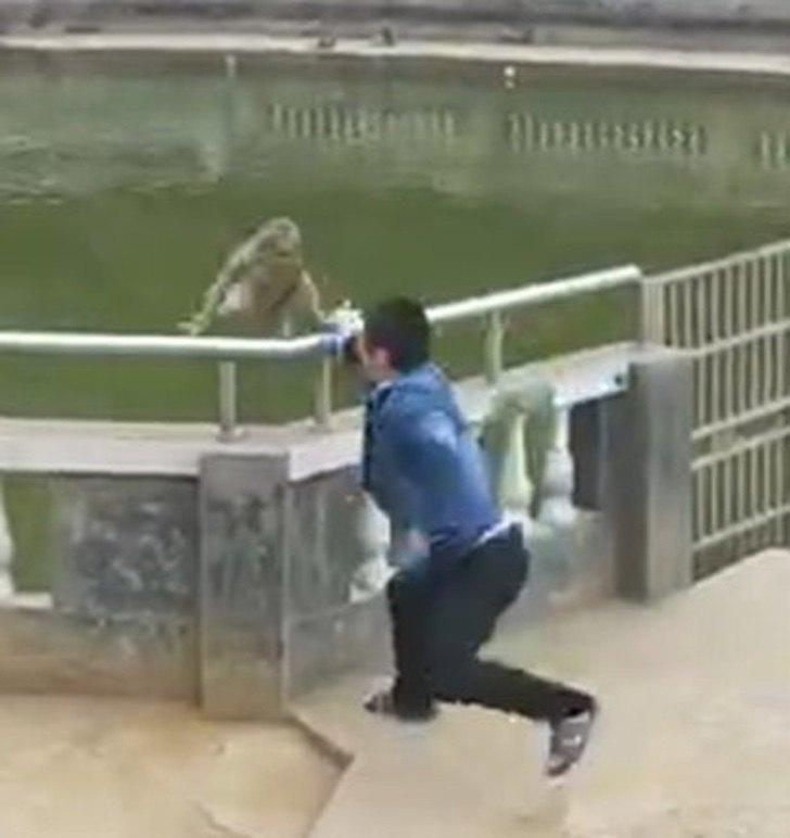 Un imprudente hombre lanza a mono al agua y sufre serias consecuencias