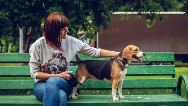Tendencia Nueva reforma municipal en Sevilla y Andalucía podría obligar a dueños de perros a limpiar sus orines