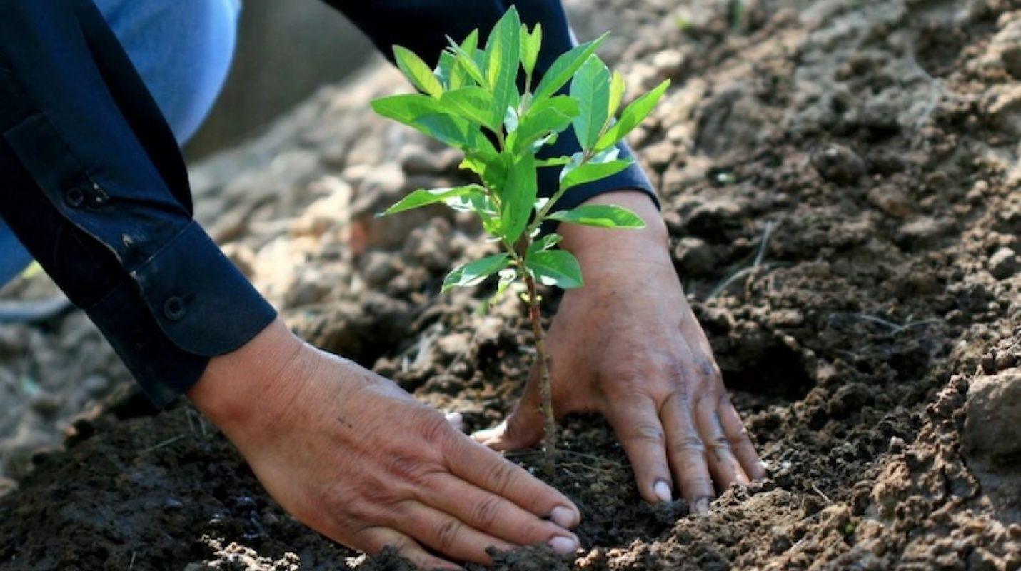 Un atroz ecocidio lleva a la condena a dos hombres a sembrar 3.000 árboles en México