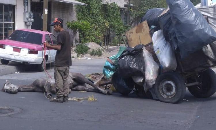 Un exhausto caballo se desmaya en México tras arrastrar una gran carreta de basura