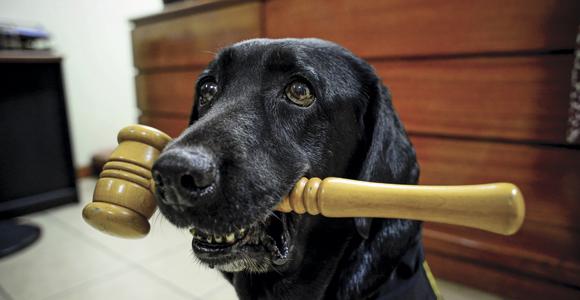 Formada asociación de abogados con el fin de proteger legalmente a los animales2