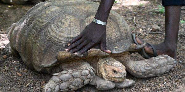 Muere a los 344 años Alagba, la tortuga más vieja que la humanidad ha conocido