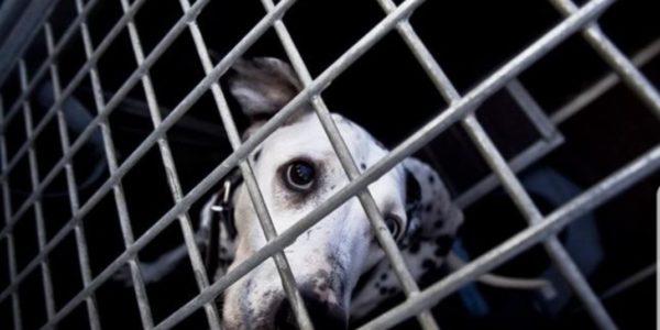 """Sanción monetaria aplicada a """"Mil Anuncios"""" y """"Vibbo"""" por venta ilícita de animales"""