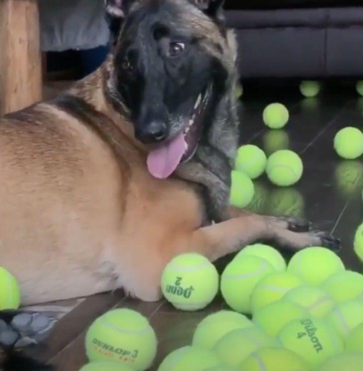 Un perro se llevó la gran sorpresa y se volvió loco el día de su cumpleaños al recibir 400 pelotas de tenis de regalolistas paran en la vía para cambiar un neumático y poco después se dan cuenta que están acompañados 1