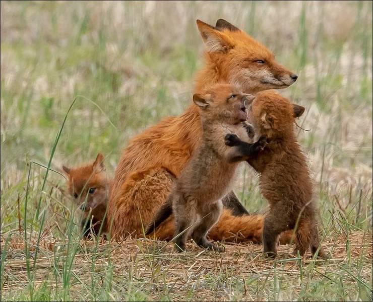 El amor de madre es igual para todas las especies.
