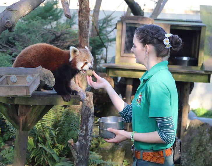 Trabajadoras pasan cuarentena en un zoológico para cuidar a los animales