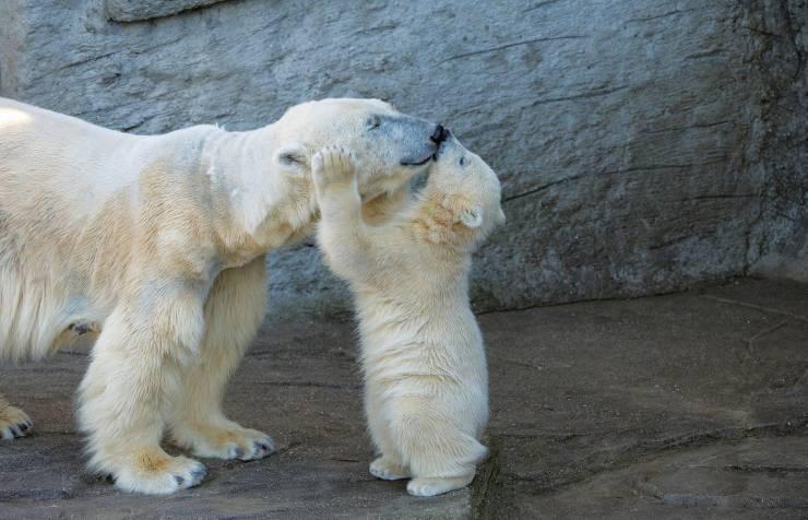 Un abrazo polar