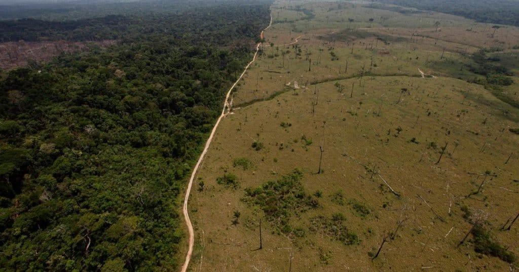 deforestar