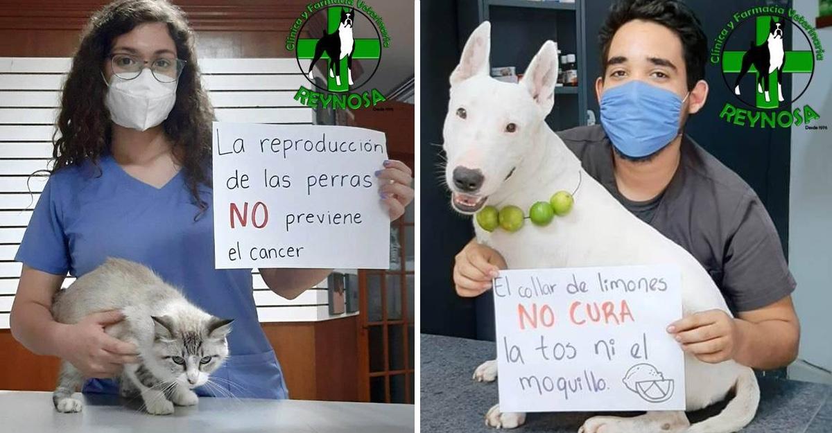 cuidar la salud de nuestras mascotas
