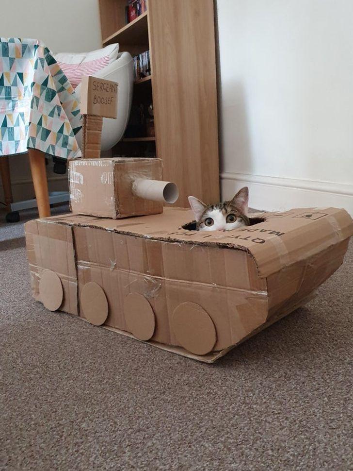 tanques de gatos