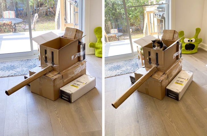tanques para gatos
