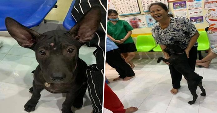 Perrito perdido busca a su dueña en veterinario