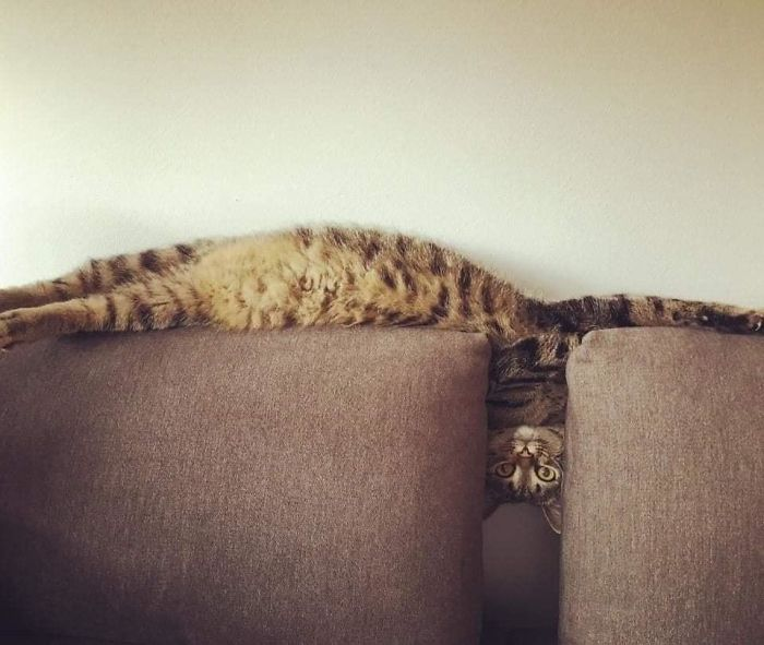 Fotografías curiosas de gatos