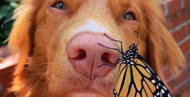 mariposas monarca y un perro