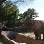 elefantes del ecoparque