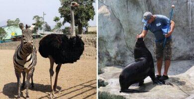 Zoológico de Huachipa en Perú solicita ayuda