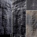 fósiles de animales