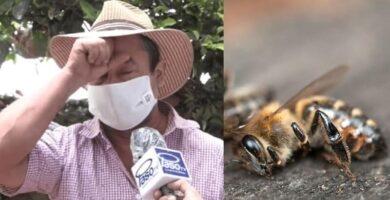 apicultor pide protección para las abejas