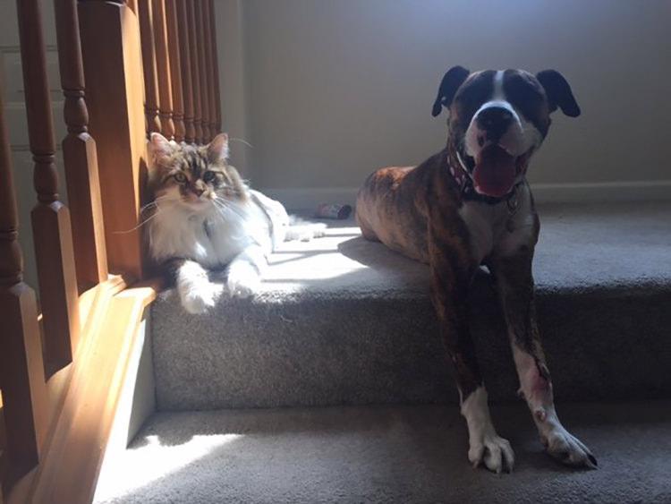 adoptar-un-perro (2)