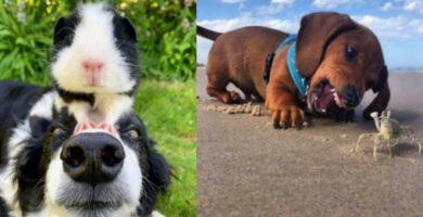 fotografías-de-perros
