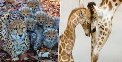 20 animales bebes adorables