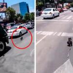Ciclista persiguió a un perro asustado para salvarle la vida