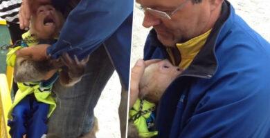 Conmovedora reacción de un mono al ver su dueño pasado un año