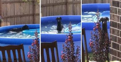 Dueño le pilló dándose un baño y la reacción del perro es muy divertida