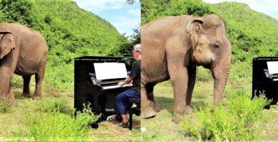 Elefante-escuchando-notas-musicales