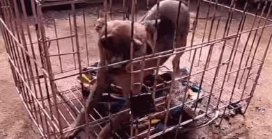 perrito encerrado en una jaula