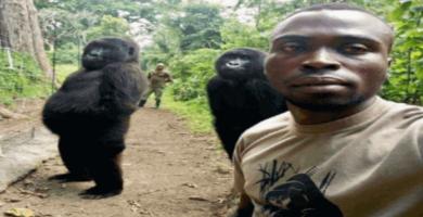 gorilas huérfanos