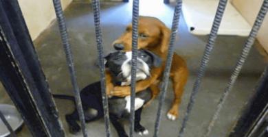 perrito de un refugio
