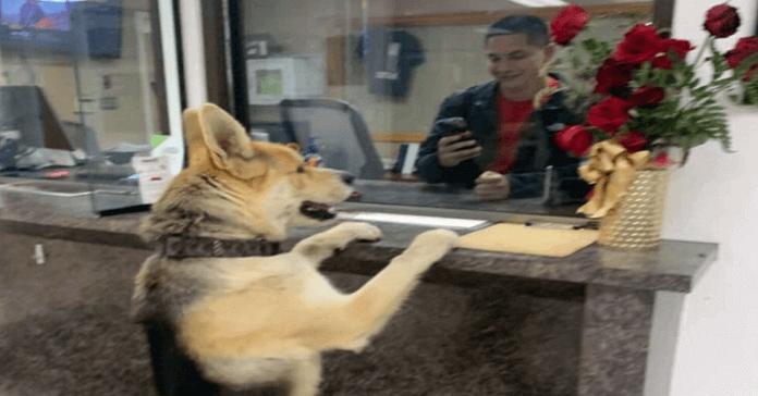cachorro se auto denuncia