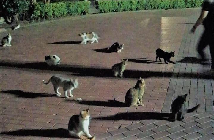 animales-callejeros