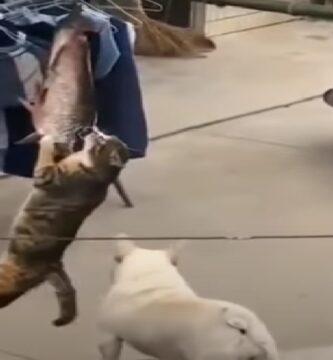 gatitos-graciosos
