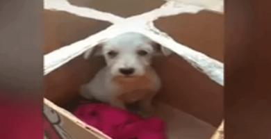 cachorro abandonado en una caja