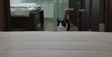 video-de-gatito