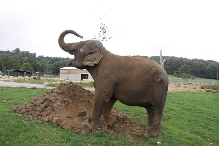 La-elefanta-solitaria-1024x683