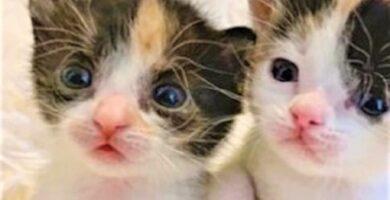 gatitos-rescatados