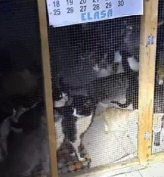 gatos-maltratados