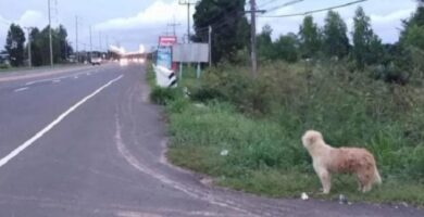 leal perrito