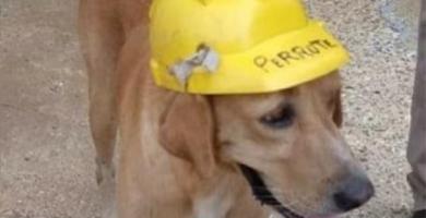 perro obrero