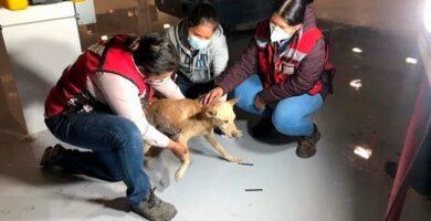 perro-rescatada-resina epóxica